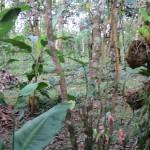 Ceylon Cinnamon