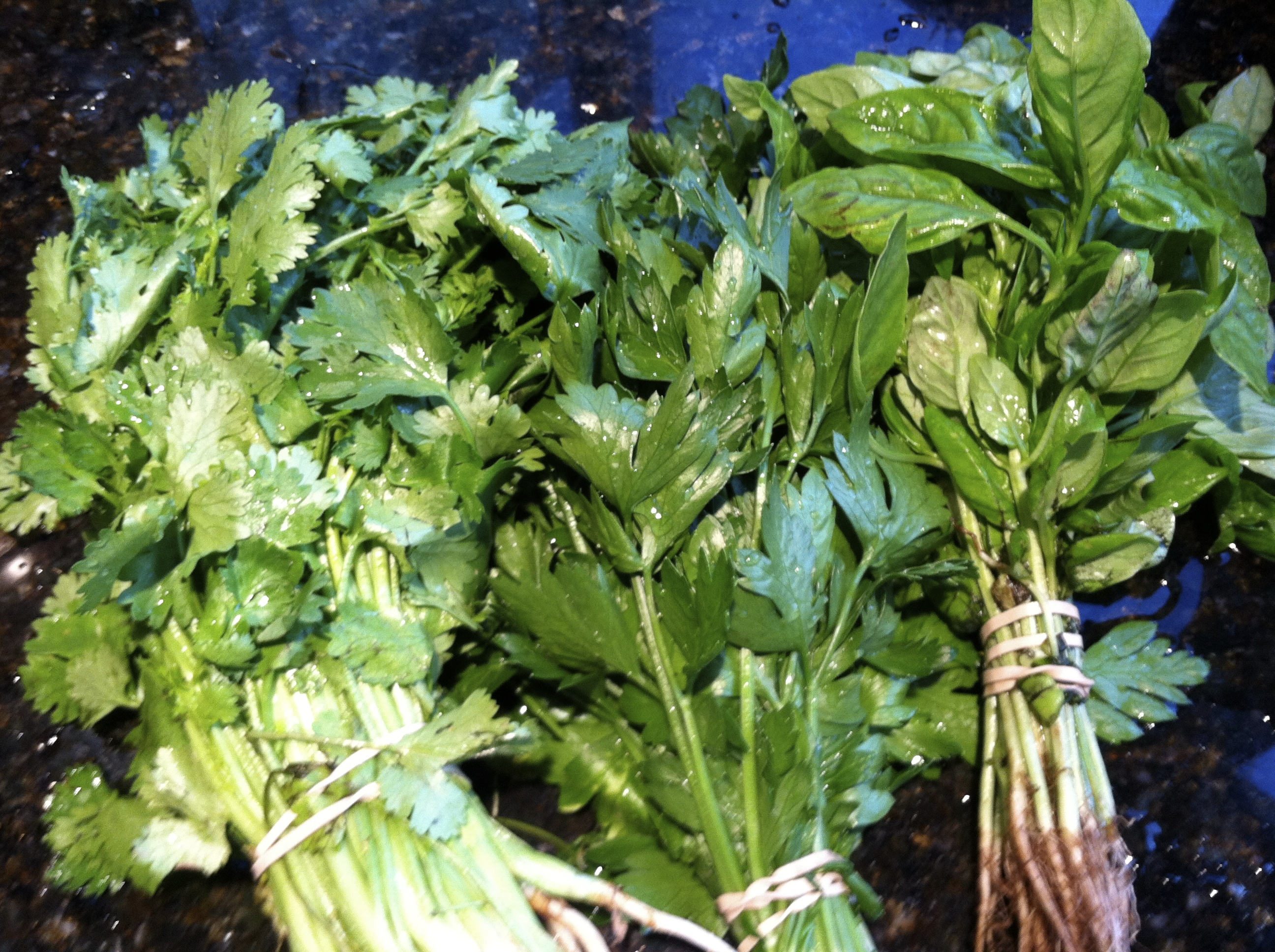 herbs for three herb pesto